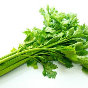 Celer listový